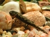 Larva Salamandra